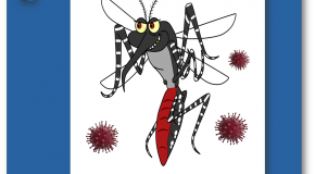 Covid-19  Le moustique tigre victime de fake news