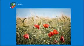 Alimentation La Commission européenne veut transformer champs et assiettes