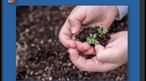 Jardinage  Les semences paysannes restent autorisées pour les amateurs