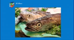 Produits de la mer – La moitié des établissements en infraction