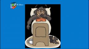 Punaises de lit – Toujours plus nombreuses