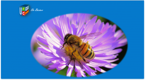 Pesticides tueurs d'abeilles – Une interdiction enfin définitive!