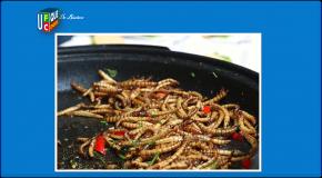 Aliments à base d'insectes – Bientôt dans nos assiettes?
