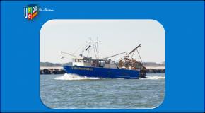 Ressources marines – Coup d'arrêt à l'amélioration des stocks de poissons